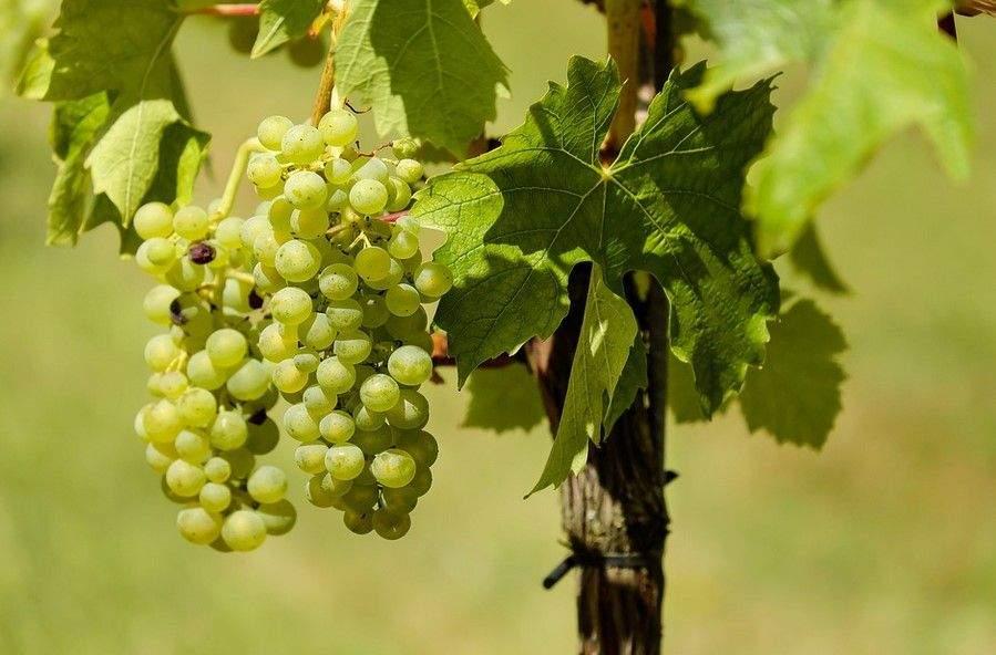 Le Vin d'Alsace Diana hotels collection